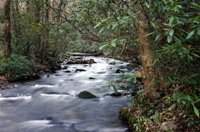 creek, water, nature, forest, environment, fish