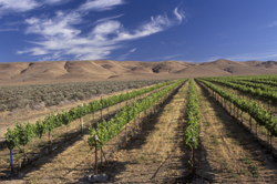 vineyard, wine, farming